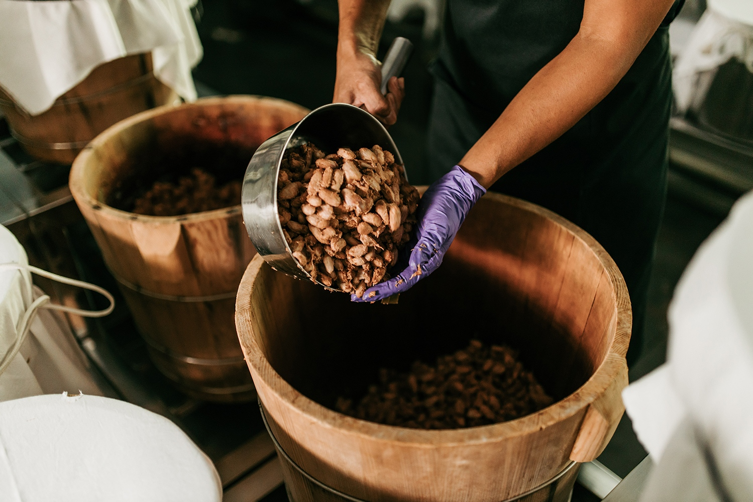 Fermenting cacao